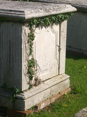 Ivy on a tomb