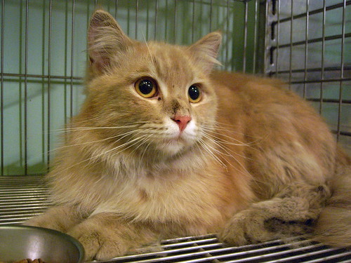 Take me home~Butter Male 1Y