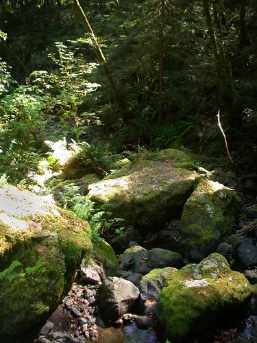 Loeb State Park Oregon. sbeagle