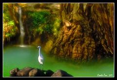 Bird of Paradise (mac_raw) Tags: city color bird water landscape bravo searchthebest global globalvillage high5 moneyshot peopleschoice themoulinrouge naturesfinest blueribbonwinner magicdonkey beautyisintheeyeofthebeholder flickrsbest flickrsmileys artlibre flickrgold shieldofexcellence anawesomeshot impressedbeauty flickrhearts 25magicdonkeysolution ultimateshot superbmasterpiece ithinkthisisartaward onenesslabyrinth diamondclassphotographer flickrdiamond picturepages globalvillage2 superhearts awesometribe