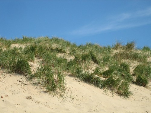 Sand Dune at Camber Sands