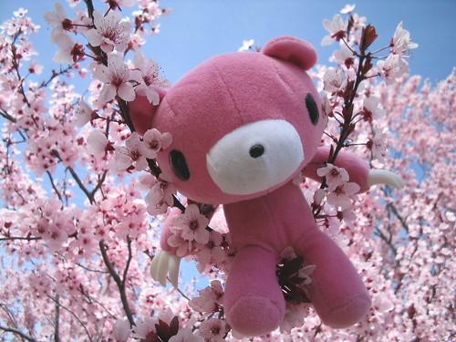 gloomy bear in the cherry tree by dreamijo.