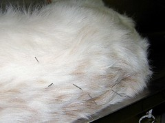 Needle Pricks (Leonardo Martins) Tags: dog brown white co zeus needle cachorro prick agulha treatment pricks tratamento