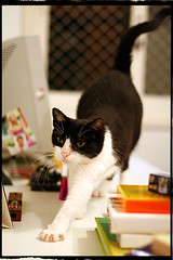 Meet the cat: VIC