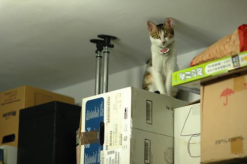 天花板躲貓貓 ......