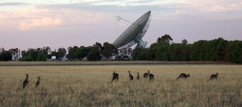 Kangaroos and the dish