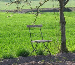 Waiting ............... (Linda6769) Tags: tree green field germany chair ast branch loneliness village blossom decay thuringia twig lonely grn peelingpaint blte einsamkeit blooming einsam lonesome sitzen bloomingtree zweig allein hessberg blhend sitzgelegenheit abbltterndefarbe alleinsein blhenderbaum