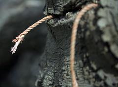 Rope (C) 2007