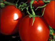 productos_ecologicos, tomates