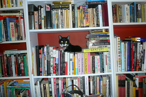 I always wanted a bookstore cat