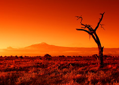 The OLD & The DEAD (| HD |) Tags: africa orange tree 20d kilimanjaro nature silhouette canon landscape fire bravo mt kenya safari hd darwish moutain hamad amboseli