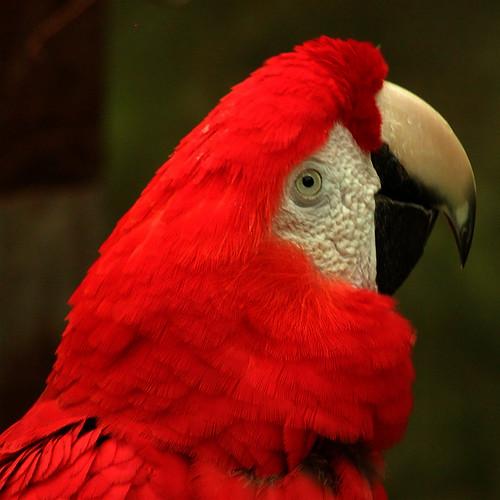 Macaw #3