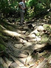 Shiratani Unsuikyo() (uqa) Tags: green forest yakushima mononoke ceder   shirataniunsuikyo