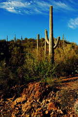 solitary figure (Sam Scholes) Tags: arizona digital cacti landscape rocks desert tucson rocky saguaro slope saguaronationalpark d80
