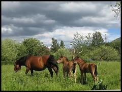 Familia equina (Aurora3) Tags: horses primavera familia caballos asturias 2007 foal asturies pastando aurofot