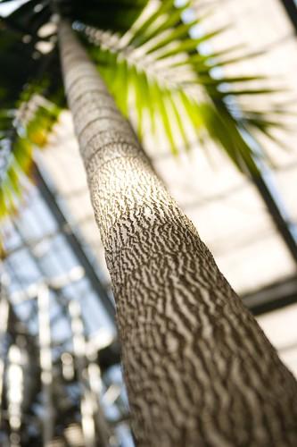 Long Palm
