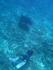 shap and a manta (bluewavechris) Tags: ocean life camera sea water animal coral canon mouth hawaii marine ray underwater wing diving maui snorkeling freediving fin reef creature manta wetsuit g7 shap