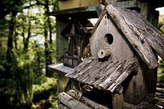 home sweet home (Jeff Epp) Tags: birthday wood old ontario canada green bird forest landscape interesting dof bokeh flash birdhouse niagara outoffocus jordan ferns vignette creativelighting jordanstation