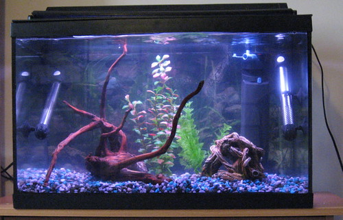 Tank almost ready for fish
