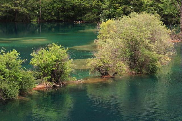 Trees in the Lake Huohuahai