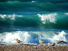 waves.... (esther**) Tags: ocean sea seagulls white reflection green beach water colors birds dark island bravo mediterranean waves wind action gulls interestingness1 greece shore splash topf100 seashore rhodes topf250 topf200 ixia interestingness3 magicdonkey interestingness15