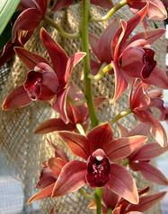 Orchidee - orchid (karin_b1966) Tags: plant orchid flower orchids frankfurt blossoms pflanze orchidee blume botanicalgarden palmengarten 2007 blten naturesfinest fantasticflowers beautifullife flowerphotography flickrflowrpowr thebeautyinlife photofans beautyofthenatureworld