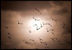 Free Nature (*atrium09) Tags: sky birds clouds bravo searchthebest olympus cielo nubes tenerife soe blueribbonwinner magicdonkey atrium09 mywinners abigfave shieldofexcellence 200750plusfaves rubenseabra