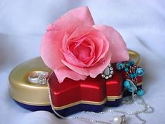 rose flower (jk10976) Tags: nepal flower rose kathmandu abigfave impressedbeauty wowiekazowie jk10976 thatsclassy jkjk976