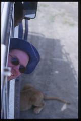 Jim in a Jeep with Lion Cubs (Viator.com) Tags: africa travel animals buffalo kenya nairobi safari lions elephants tours rhinoceros carnivore viator popularactivitiesandthingstodoindestinationsworldwide