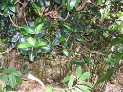 Rainforest 27