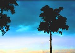 Sky III (FL370) Tags: trees sky colorful windshield cwd cwd142