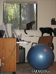 Home Office (complete with kittens) 4-20-2007 ...