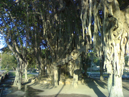 أصحابى وصحباتى ..تعرف / تعرفي على اجمل الحدائق في العالم / موضوع متجدد - صفحة 2 469656355_3e360ae652
