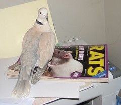My Dove reads up on his roommates