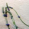 (olvwu | 莫方) Tags: blue usa flower macro wall ga georgia spring savannah blueflower jungpangwu oliverwu oliverjpwu olvwu jungpang 莫方 吳榮邦