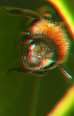 "3D Bee • <a style=""font-size:0.8em;"" href=""http://www.flickr.com/photos/57024565@N00/478469363/"" target=""_blank"">View on Flickr</a>"