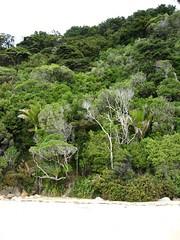 forest (Maggie Paige) Tags: newzealand southisland abeltasmannationalpark coastaltrack