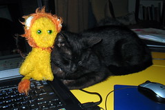 Kicius Gustaw Czarowny and Lewek (K0P) Tags: black cat toy kot 2007 zabawka lewek pluszak kicius