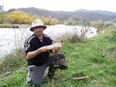 Trout (hollis_corey) Tags: fish mountains water river fishing fisherman snowy nsw trout mates browntrout troutfishing khancoban swampyplainsriver
