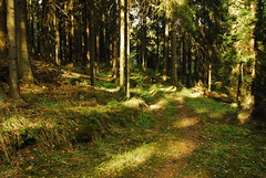 Forest road (aixcracker) Tags: suomi finland spring may rapids maj vår fors mäntsälä kevät koski toukokuu nikond200 feelenkoski kamera67