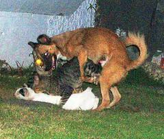 animal orgy! (psychogoddess) Tags: dog cats animals sex catsanddog dogandcats