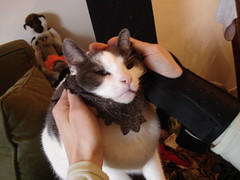 Knitting a beard for a cat... (blimp_james) Tags: capote