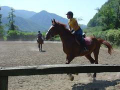 Forza Simo (*_toffoletta_*) Tags: cavalli simo secco