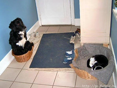 Dog and Cat in different beds
