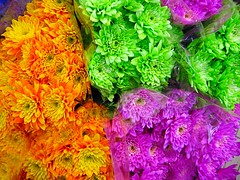 Colorful Flowers (NguyenDai) Tags: belgique lige colorfulflowers nguyendai flickrelite fleurscolores