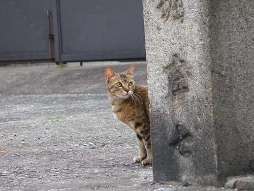 Today's Cat@20070527