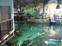 "Top of the ""Habitats of Monterey Bay"" exhibit (mirtai) Tags: california ca aquarium monterey montereybayaquarium montereypeninsula dscf2625"