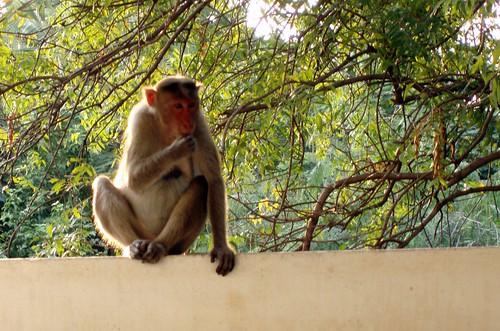 Monkey, sitting in front of my door