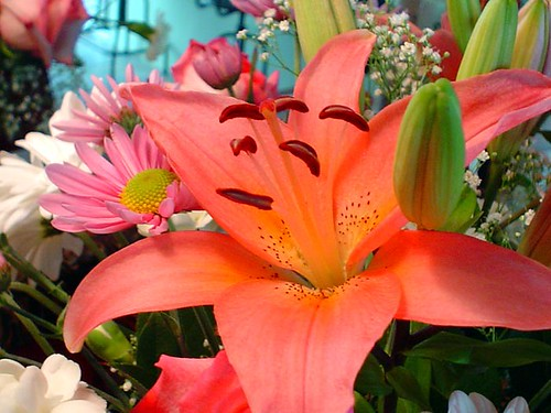 Flower Bouquet - Lily