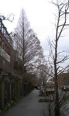 20050105 liz-christy-east (Jym Dyer) Tags: nyc newyorkcity tree redwood communitygarden dawnredwood lizchristy